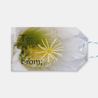 Innerhalb eines Echinopsis in der Blüte Geschenkanhänger