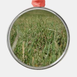Innerhalb, keimt das üppige grüne Gras überall Silbernes Ornament