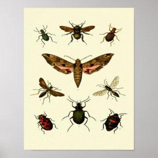 Insekt-Druck von 9 Vintagen Insekten Poster