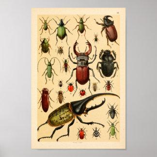 Insekten-Käfer-Sammlungs-Kunst-Druck Poster