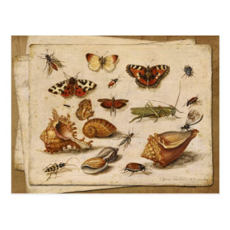 Insekten, Muscheln und Schmetterlinge Postkarte