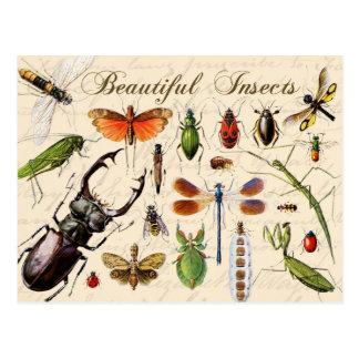 Insekten - verschiedensten Organismen der Erde die Postkarte