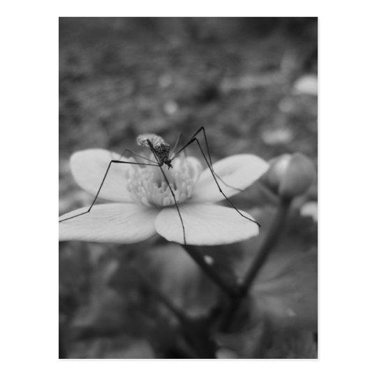 insektschwarzweiß postkarte
