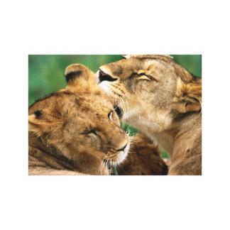 InspireMe Collecshions. Intiguing Löwen von Kenia Leinwanddruck