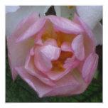 Invitación - Fiesta Cumpleaños - La Rosa Rosa Quadratische 13,3 Cm Einladungskarte