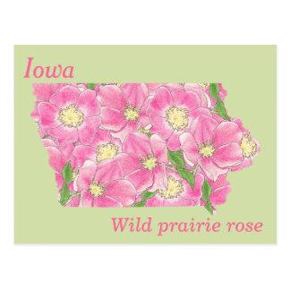 Iowa-Staats-Blumen-Collagen-Karte Postkarten