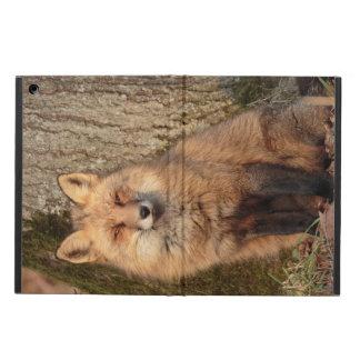 iPad Fall: Sitzender Fox