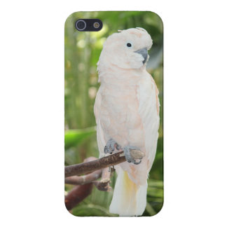 iPhone 5/5S Cockatoo-Papageien-glatter Endfall iPhone 5 Schutzhülle