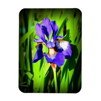 "Iris 3"" durch 4"" Foto-Magnet Magnet"