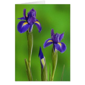 Iris-Blumen Karte