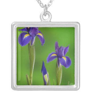 Iris-Blumen Versilberte Kette