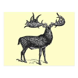 Irische Rotwild Postkarte
