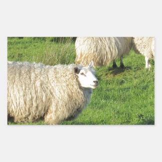 Irische Schafe Rechteckiger Aufkleber