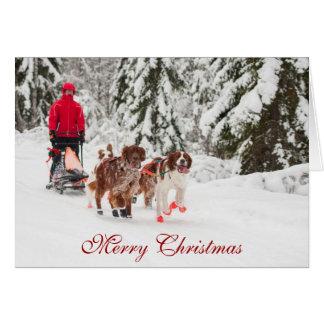 Irischer Setter Sleddog Weihnachtskarte Karte