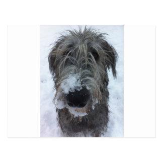 irischer Wolfhound, der im Schnee spielt Postkarte