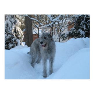 Irischer Wolfhound Postkarte