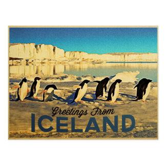 Island-Pinguine Postkarte