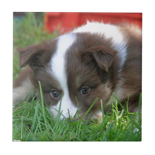 Islandhund Fliese