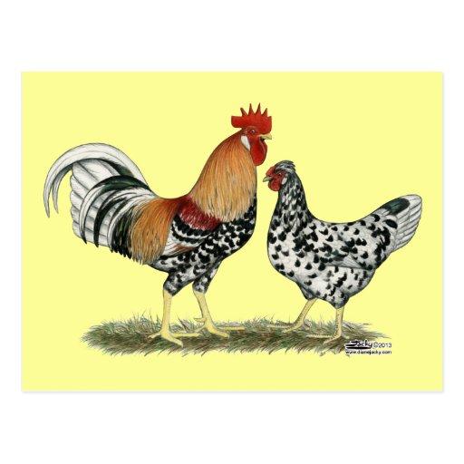 Isländische Hühner Postkarte