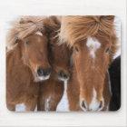 Isländische Pferde nuzzle, Island Mousepad