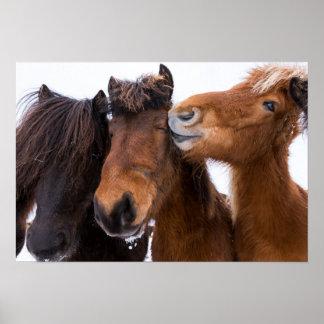 Isländische Pferdefreunde, Island Poster