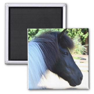 Isländischer Pferdemagnet Quadratischer Magnet