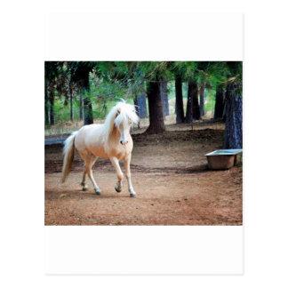 Isländisches Pferd Postkarte