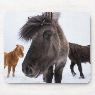 Isländisches Pferdeporträt, Island Mauspads
