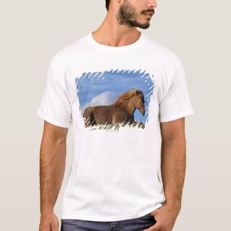 Isländisches Pferdestillstehen und -himmel T-Shirt