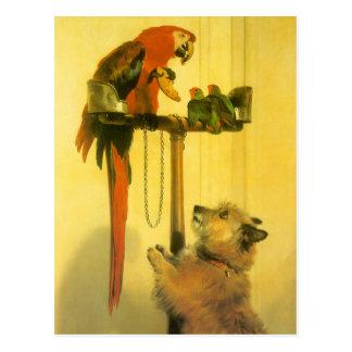 Islay, Tilco, ein Macaw und Liebe-Vögel durch Postkarte