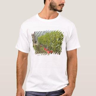 Italien, Toskana, Montalcino. Behälter von T-Shirt
