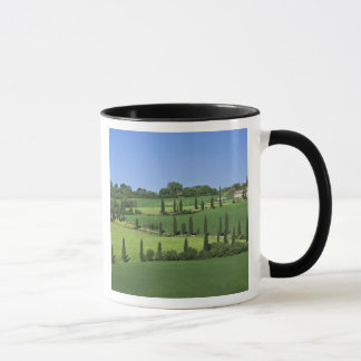 Italien, Toskana, Multepulciano. Zypresse-Bäume Tasse