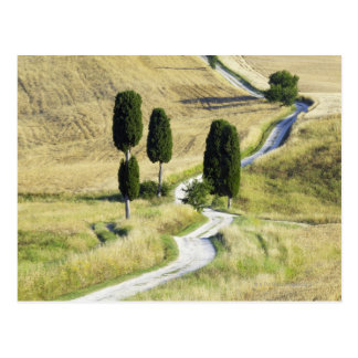 Italien, Toskana, Pienza, Val d'Orcia, Zypresse Postkarte