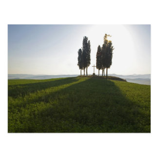 Italien, Toskana, Zypresse-Bäume in Toskana mit Postkarte