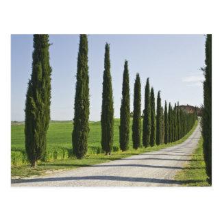 Italien, Toskana. Zypresse-Baumlinie Fahrstraße zu Postkarte