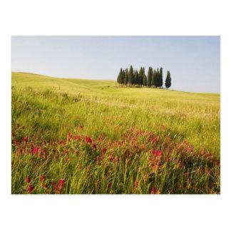 Italien, Tuscnay, Gruppierung von toskanischer Postkarte