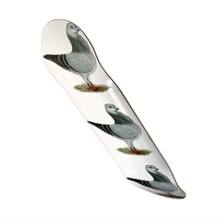 Italienische Eulegrizzle-Taube 20,1 Cm Skateboard Deck