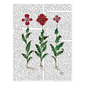 Italienische Gartennelke 1 Postkarte