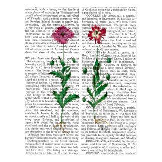 Italienische Gartennelke 3 Postkarte
