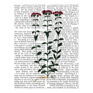Italienische Gartennelke 6 Postkarte