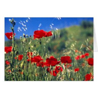 Italienische Mohnblumen Grußkarte