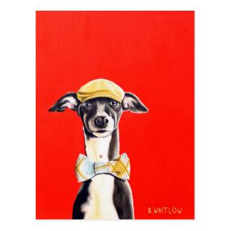 Italienischer Windhund-Hundepostkarte - Harry Postkarte