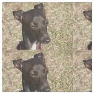 italienisches greyhound.png stoff