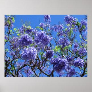 Jacaranda-Baum Poster