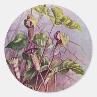 Jack-in-d-Kanzel botanische Blumen-runder Runder Aufkleber