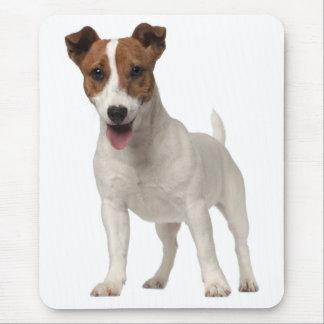 Jack-Russell-Terrier-Welpe Brown und weißer Hund Mousepads