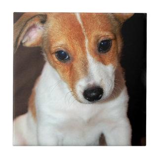 Jack-Russell-Terrier-Welpen-Hundefliese Fliese