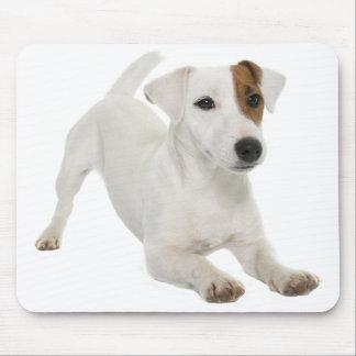 Jack-Russell-Terrier-Welpen-HundeLiebe Mousepad