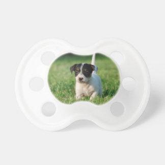 Jack-Russell-Terrierwelpe Schnuller