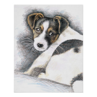 Jack Russell Welpe - Jack Russell Puppy Poster